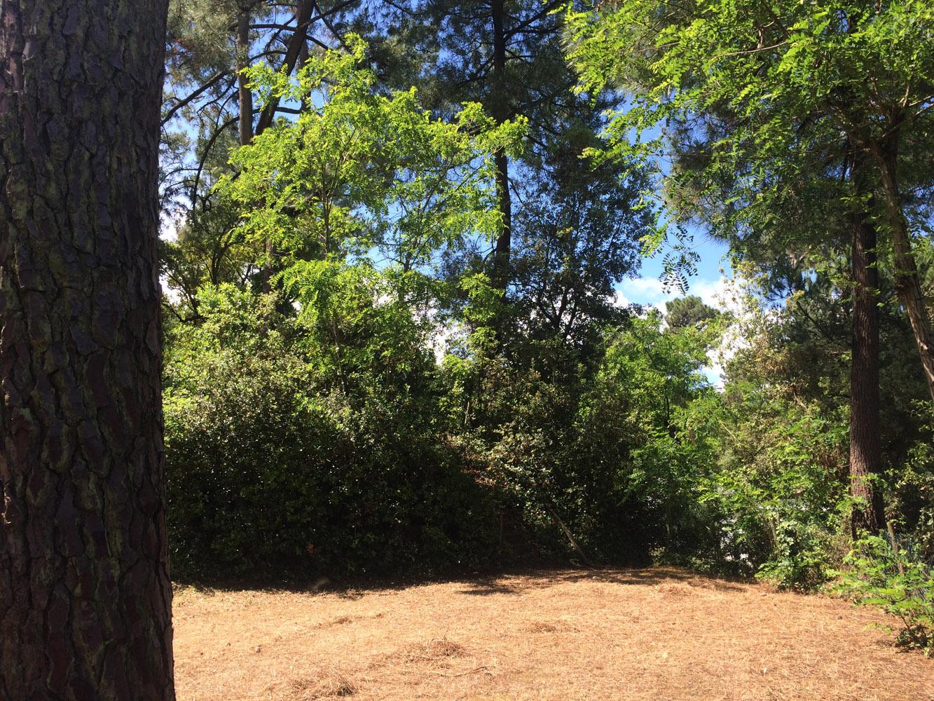 Emplacement Tente Forêt  Camping pitches Royan, Charente  ~ Bois Soleil Saint Georges De Didonne